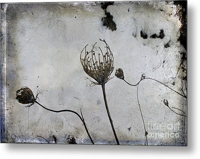 Snow Seeds Metal Print by Paul Grand