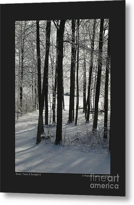 Snow Trees And Sunlight-ii Metal Print by Patricia Overmoyer