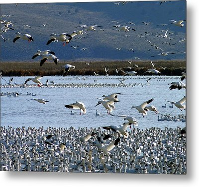 Snowing On Lower Klamath Lake Metal Print