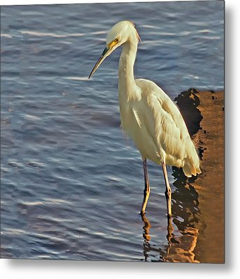 Snowy Egret At Sunrise Metal Print by Sandra Anderson