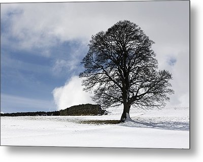 Snowy Field And Tree Metal Print by John Short