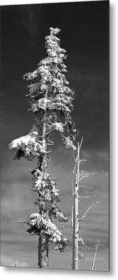 Snowy Pine Tree Metal Print by Twenty Two North Photography