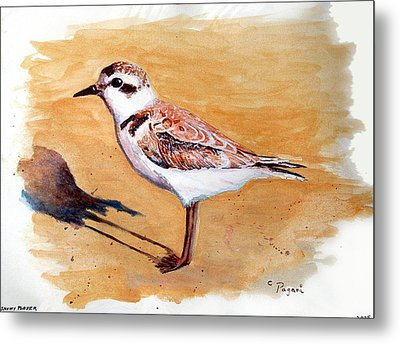 Metal Print featuring the painting Snowy Plover by Chriss Pagani
