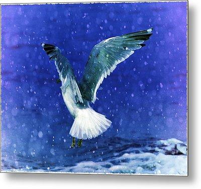 Snowy Seagull Metal Print by Debra  Miller