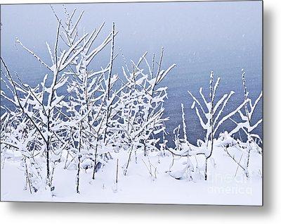 Snowy Trees Metal Print by Elena Elisseeva
