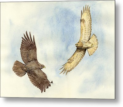 Soaring Buzzards Metal Print by Chris Pendleton