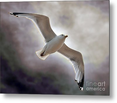 Soaring Metal Print by Graham Taylor