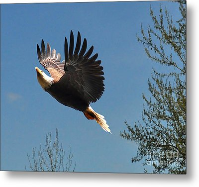 Metal Print featuring the photograph Soaring by Jack Moskovita