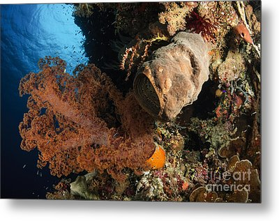Soft Coral Seascape, Indonesia Metal Print by Todd Winner