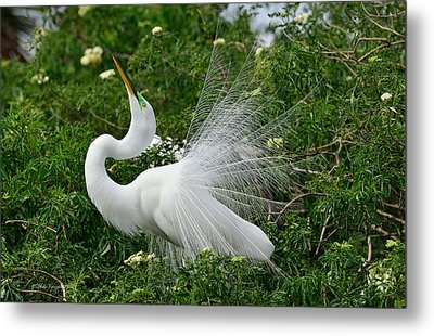 Soft Display Metal Print by Mike Fitzgerald