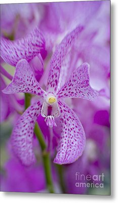 Soft On Orchids Metal Print by Jacky Parker