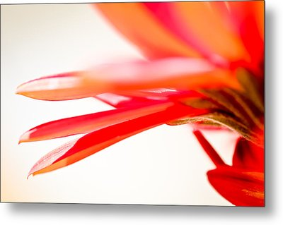 Softly Red Metal Print by April Reppucci