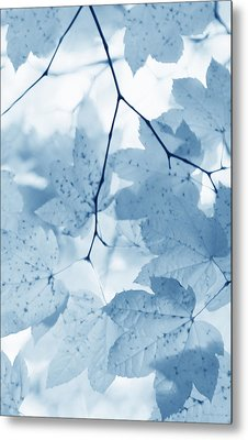 Softness Of Blue Leaves Metal Print by Jennie Marie Schell
