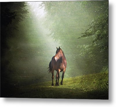Solitary Horse Metal Print by Christiana Stawski