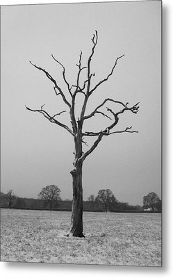 Solitude Metal Print by Michael Standen Smith