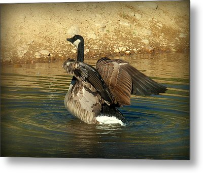 Something To Flap About Metal Print by Cindy Wright