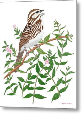 Metal Print featuring the digital art Song Sparrow by Walter Colvin