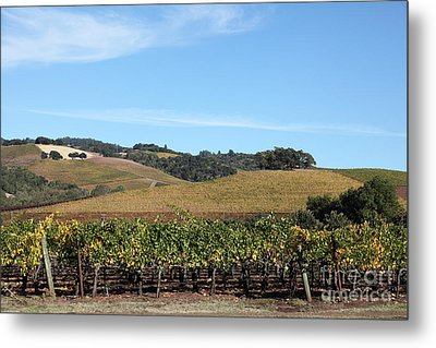 Sonoma Vineyards - Sonoma California - 5d19309 Metal Print by Wingsdomain Art and Photography
