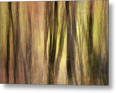 Sourwoods In Autumn Abstract Metal Print by Rob Travis