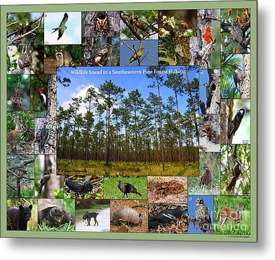 Southeastern Pine Forest Wildlife Poster Metal Print by Barbara Bowen