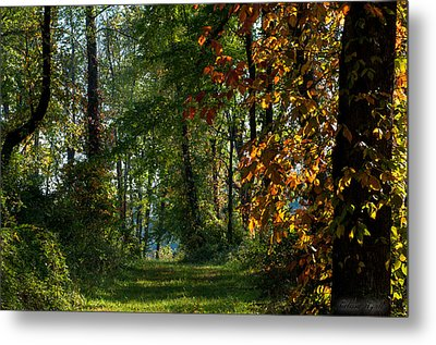 Southern Indiana Fall Colors Metal Print by Melissa Wyatt