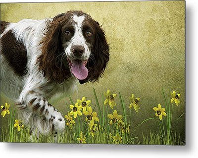 Spaniel With Daffodils Metal Print by Ethiriel  Photography