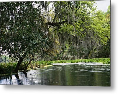 Spanish Moss Fills Tree Branches Metal Print