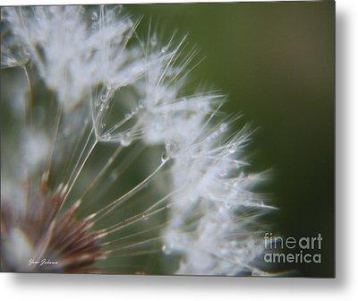 Sparkle Seeds Metal Print by Yumi Johnson
