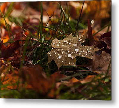 Metal Print featuring the photograph Sparkling Gems by Cheryl Baxter