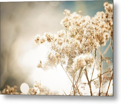 Metal Print featuring the photograph Sparkly Weeds by Cheryl Baxter