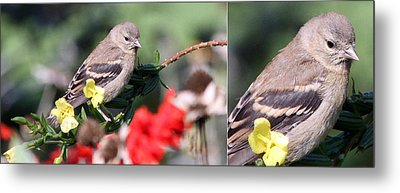 Metal Print featuring the photograph Sparrow With Detail by Mark J Seefeldt