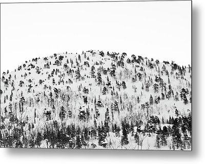 Sparse Mountain Forest In Norwegian Winter Metal Print