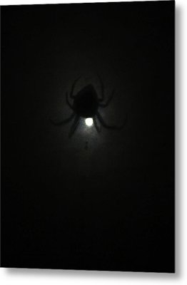 Spider In The Moonlight Metal Print by Kym Backland