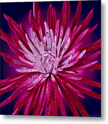Spider Mum Metal Print by Tony Chimento