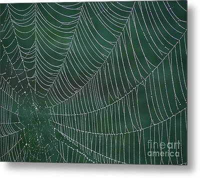 Spider Web With Dew Drops Metal Print by Chad and Stacey Hall