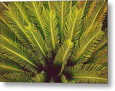 Spiked Leaves Metal Print by Sumit Mehndiratta