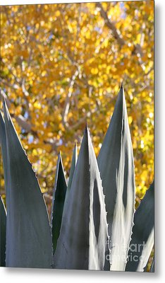 Spikes And Leaves Metal Print