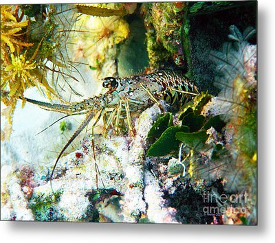 Metal Print featuring the photograph Spiny by Li Newton