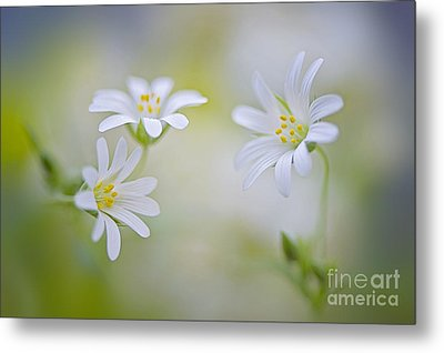 Spirits Of Spring Metal Print