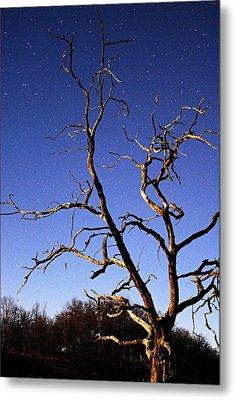 Spooky Tree Metal Print by Larry Ricker