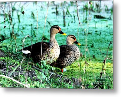 Metal Print featuring the photograph Spot Bill Ducks by Pravine Chester
