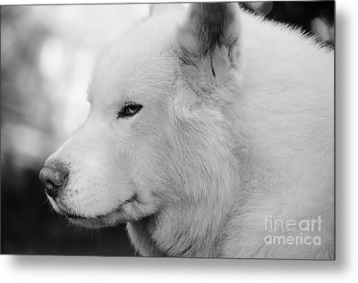 Spot In Black And White Metal Print by Lynda Dawson-Youngclaus