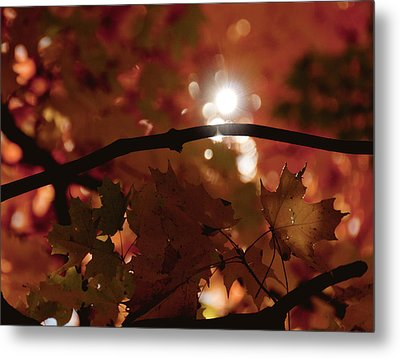 Metal Print featuring the photograph Spotlight On Fall by Cheryl Baxter