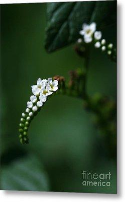 Spray Of White Flowers Metal Print by Sabrina L Ryan