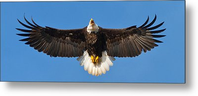 Metal Print featuring the photograph Spread Eagle by Randall Branham
