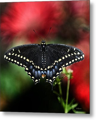 Spread The Wings Metal Print