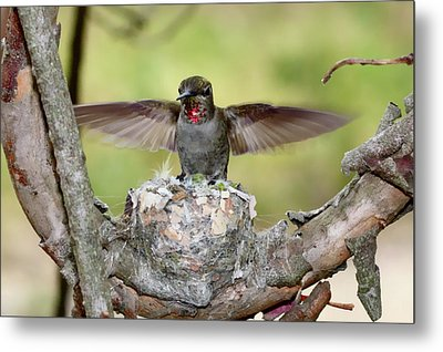 Spread Your Wings Metal Print by Paul Marto
