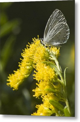 Spring Azure And Goldenrod Metal Print