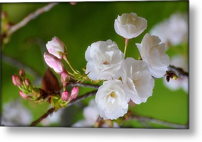 Metal Print featuring the photograph Spring Beauty by Rima Biswas