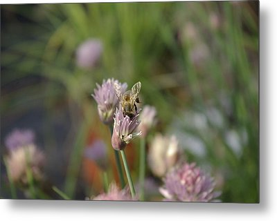 Metal Print featuring the photograph Spring Bee by Serene Maisey